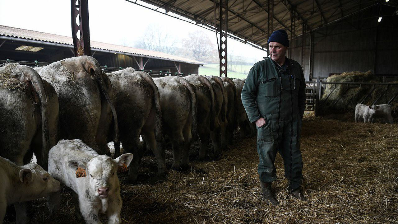 Le prix moyen pour les bovins et veaux de boucherie a baissé de 1,3% en 2019.