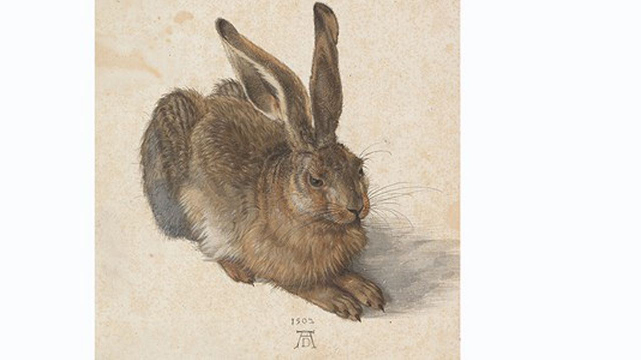 Expo: Albrecht Dürer à grands traits