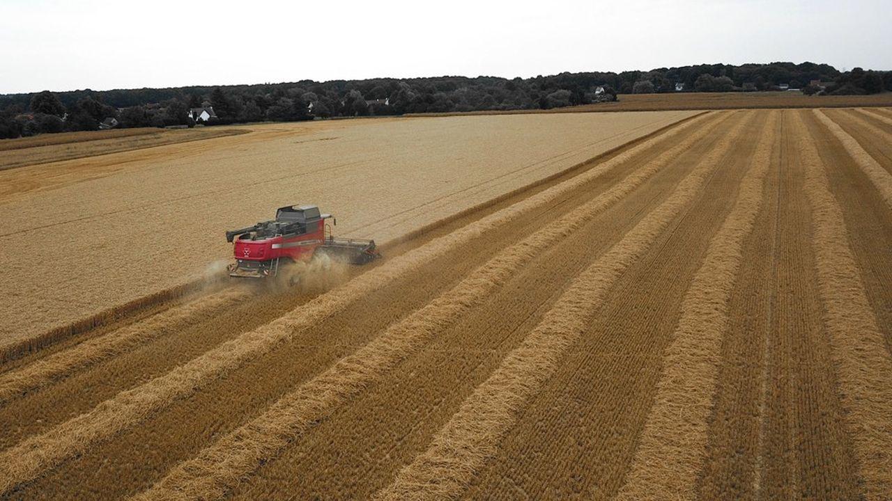 Pour relancer la filière agricole, la région Île-de-France mise sur l'alimentation locale.