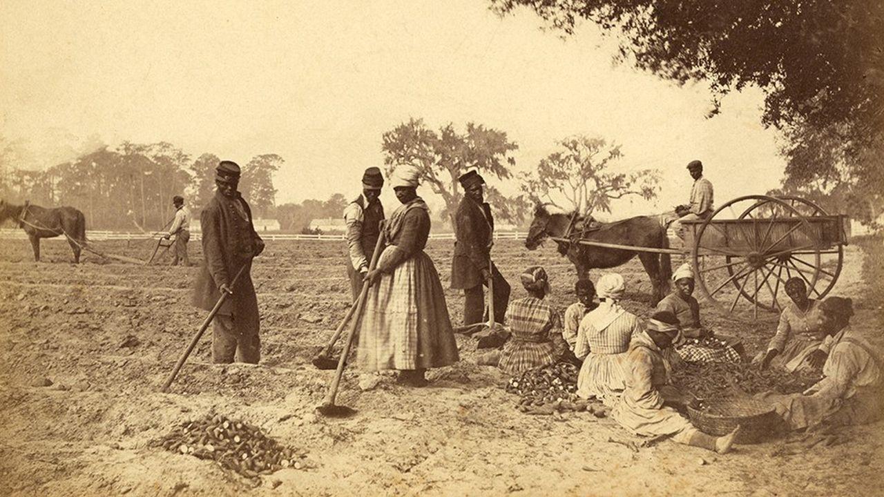Esclaves ramassant des patates douces en Caroline du Sud, vers 1862