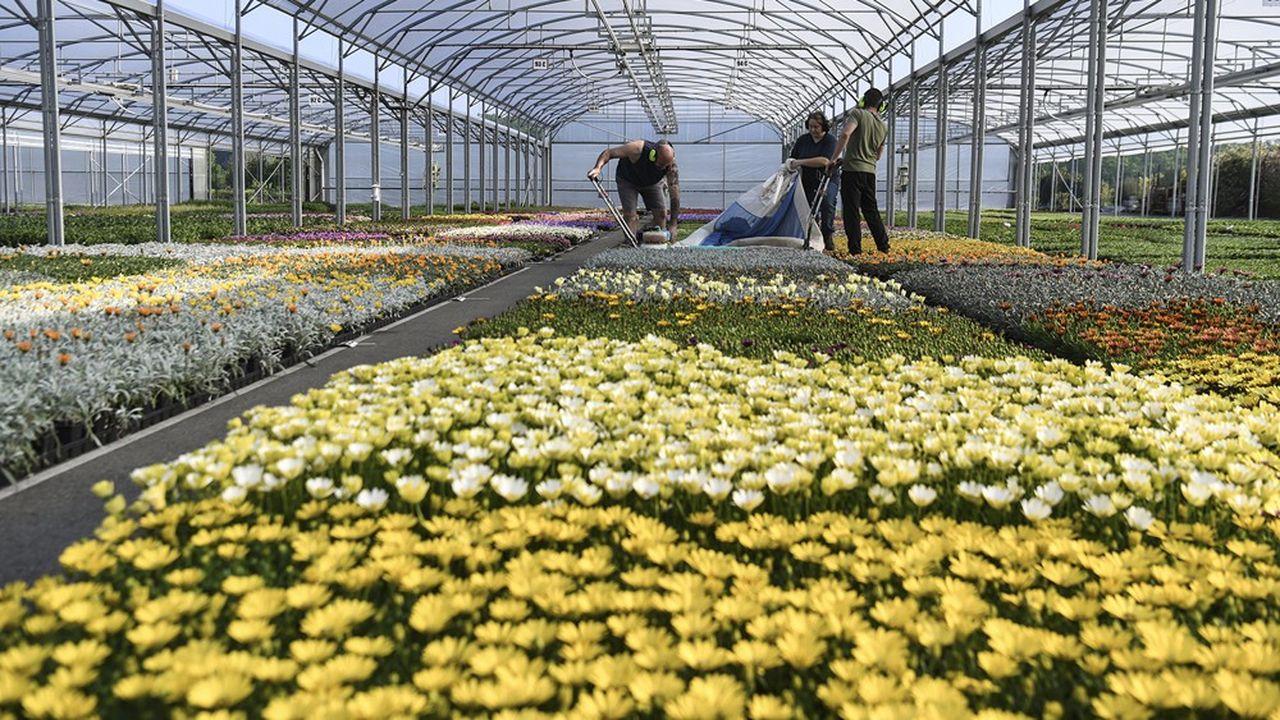 Le début du confinement correspondait avec la période cruciale de vente directe vers les jardineries et les collectivités.