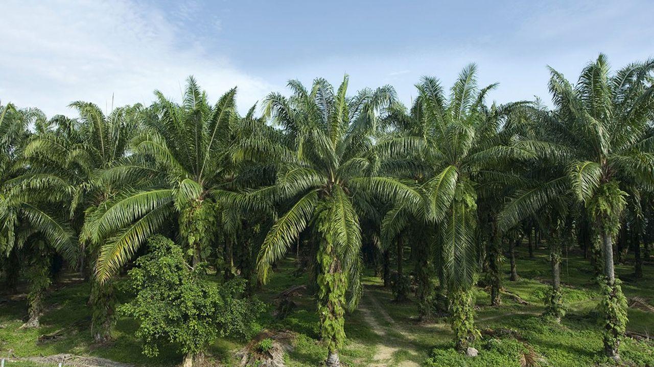 L'huile de palme a été l'une des grandes victimes de la pandémie parce qu'elle est très utilisée dans les carburants, notamment dansles « biodiesels ».