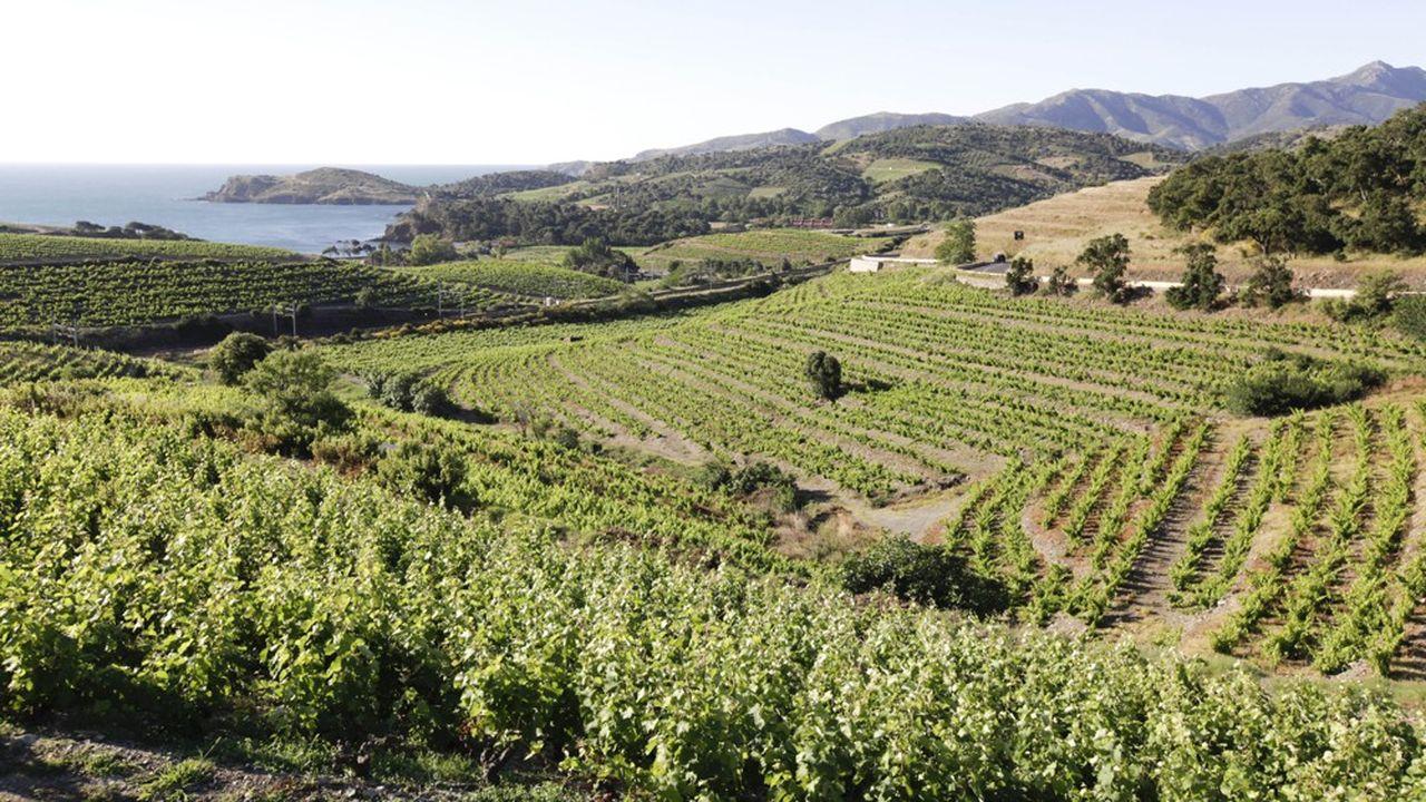 «Le climat du Languedoc Roussillon est «particulièrement favorable» au mode de conduite bio de la vigne», selon le directeur général de Invivo, Thierry Blandinières.