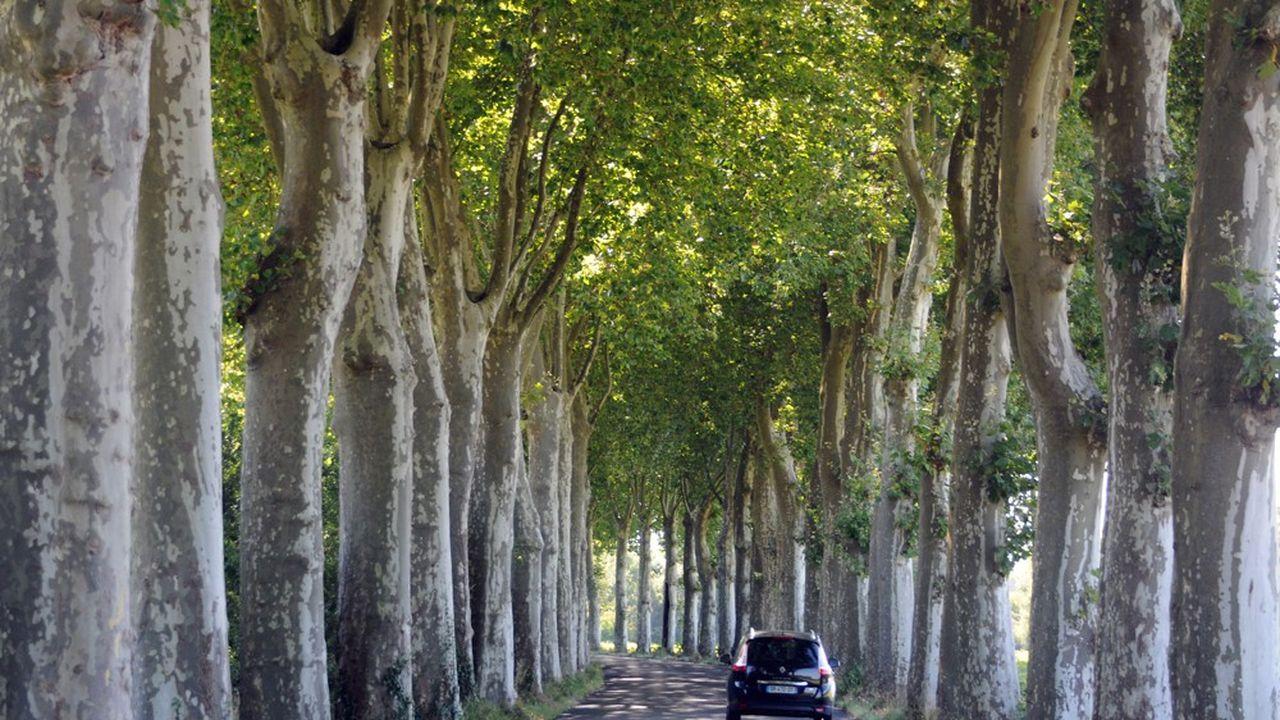 Une route traversant des espaces boisés.