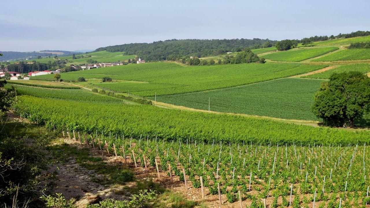 En France, les bourgognes enregistrent une chute de l'ordre de 25 à 30%, faute d'avoir pu être vendus dans le réseau traditionnel des cavistes, cafés et hôtels restaurants.