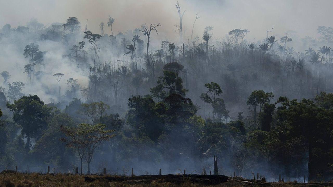 La déforestation au Brésil était déjà très élevée cette année avant même le début de la saison sèche, avec plus de 2.000km2 déboisés de janvier à mai, 34% de plus que sur la même période de 2019.