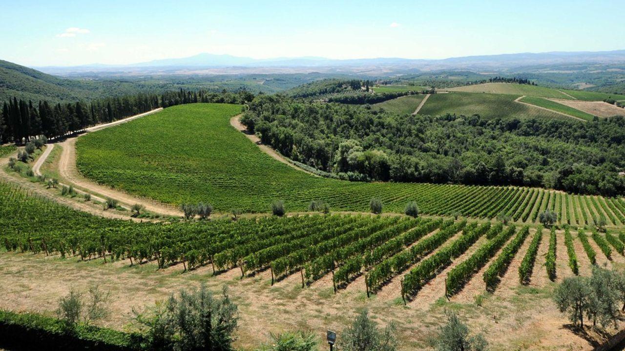 « Le ralentissement de plusieurs marchés clés comme les Etats-Unis, l'Italie, l'Allemagne, la France et la Chine ne permettra pas à l'industrie du vin de surmonter les pertes accumulées pendant la crise du Covid », estime Mark Meek, le patron de IWSR.