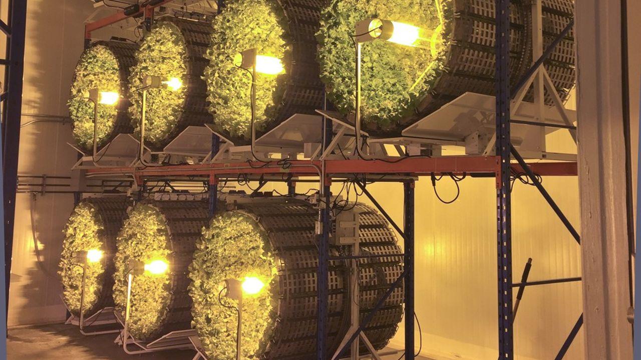Futura Gaïa va déployer une ferme pilote de 50 systèmes de culture à Tarascon.