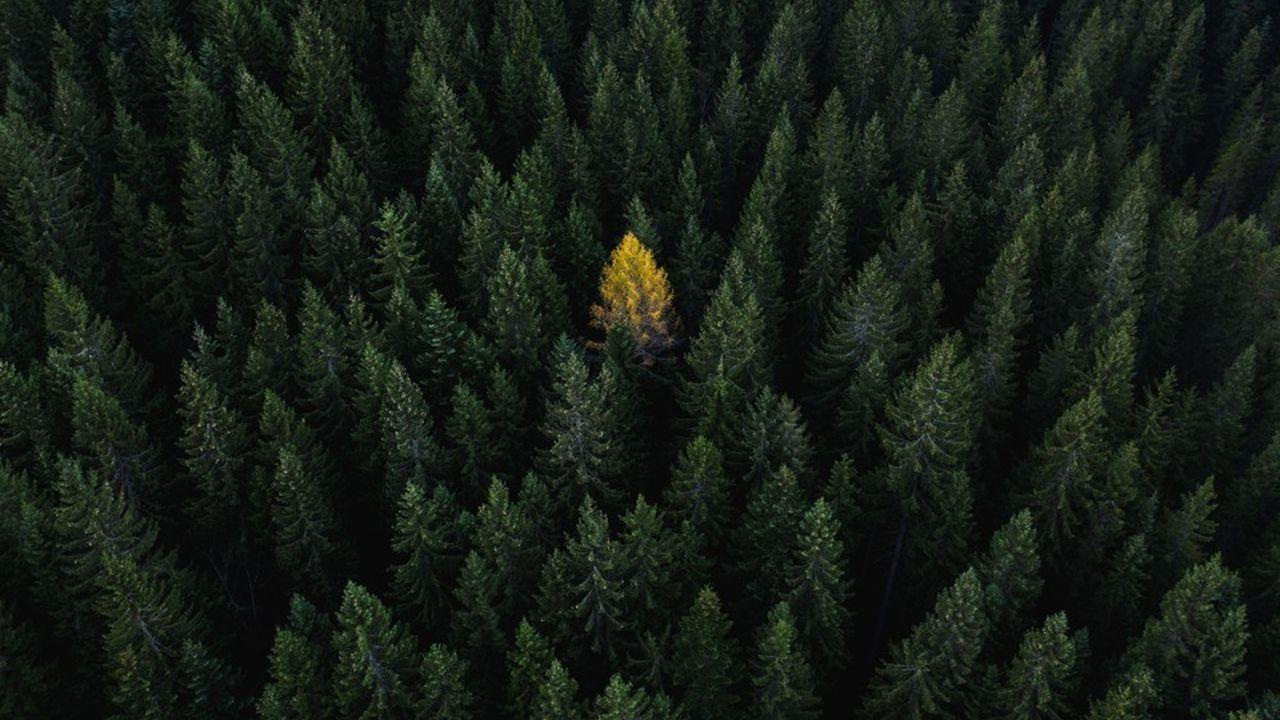 L'utilisateur a également la possibilité de compenser son empreinte carbone en finançant la plantation d'arbres.