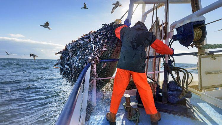 Les risques de la surpêche pèsent sur les réserves halieutiques.