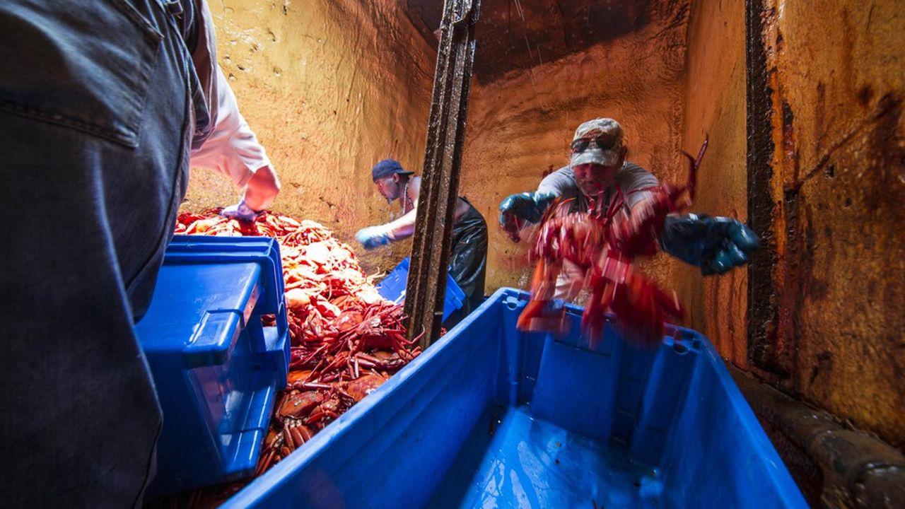 Pêche au crabe en Amérique du nord, labellisée Marine Stewardship Council (MSC).