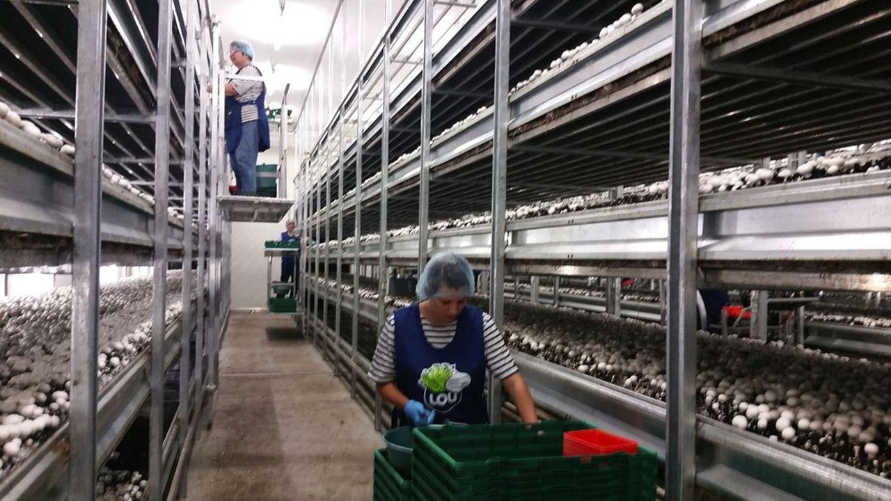 Les ventes sous la marque Lou-Légumes ont progressé de 20% pendant la période du confinement, synonyme de consommation accrue au domicile des Français.