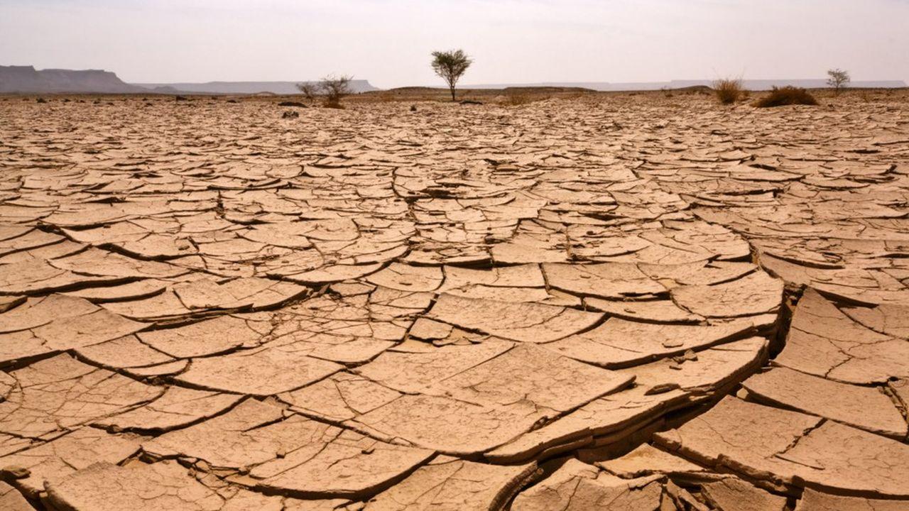 De nombreuses régions pourraient connaître des conditions plus sèches que ces dernières années.