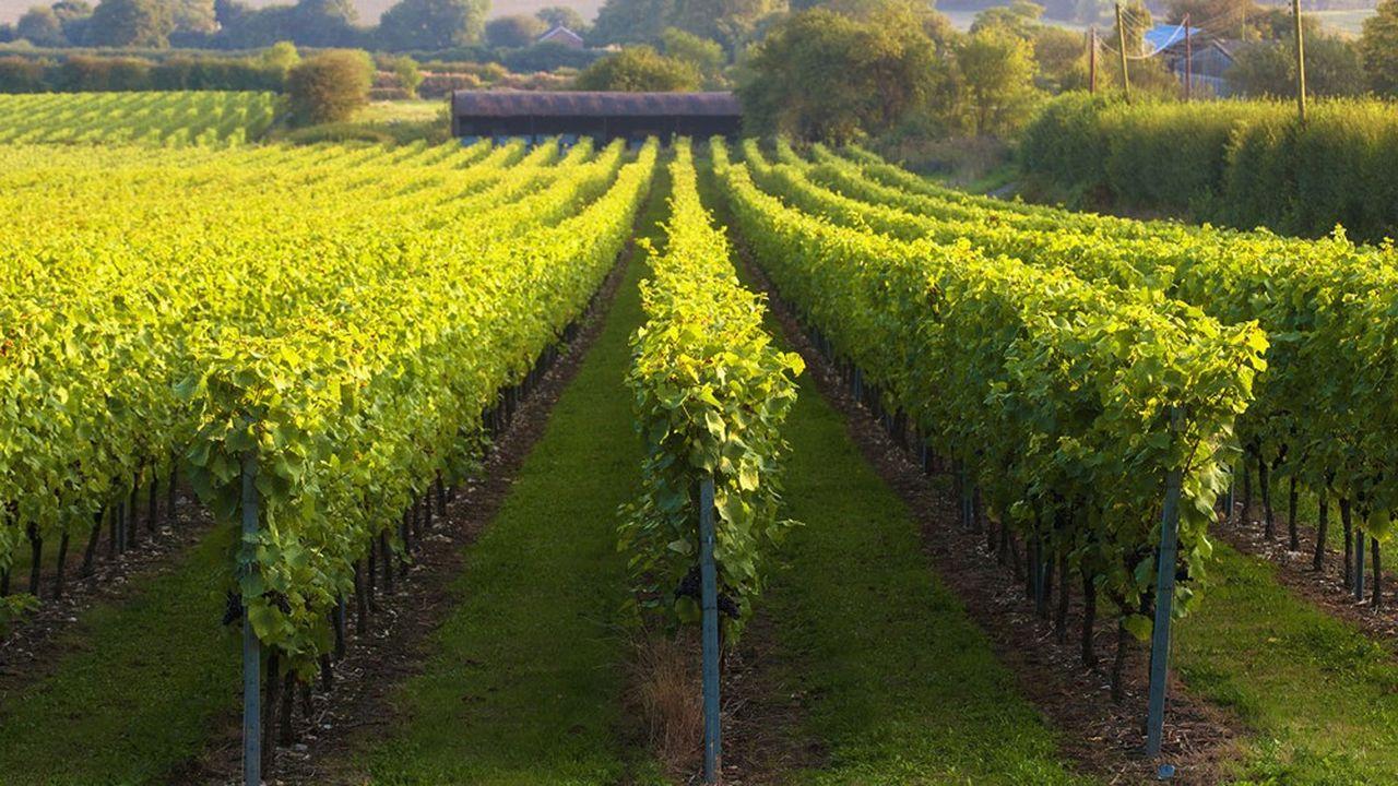 Les viticulteurs estiment que la crise sanitaire a engendré un manque à gagner d'«au moins 1,5milliard d'euros».