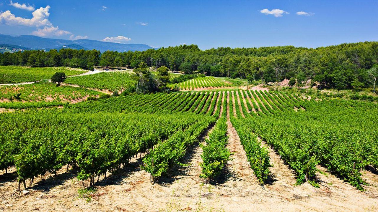Avec un peu plus de 170millions de bouteilles, les AOC de vins rosés assurent quelque 600millions d'euros de recettes aux viticulteurs provençaux.