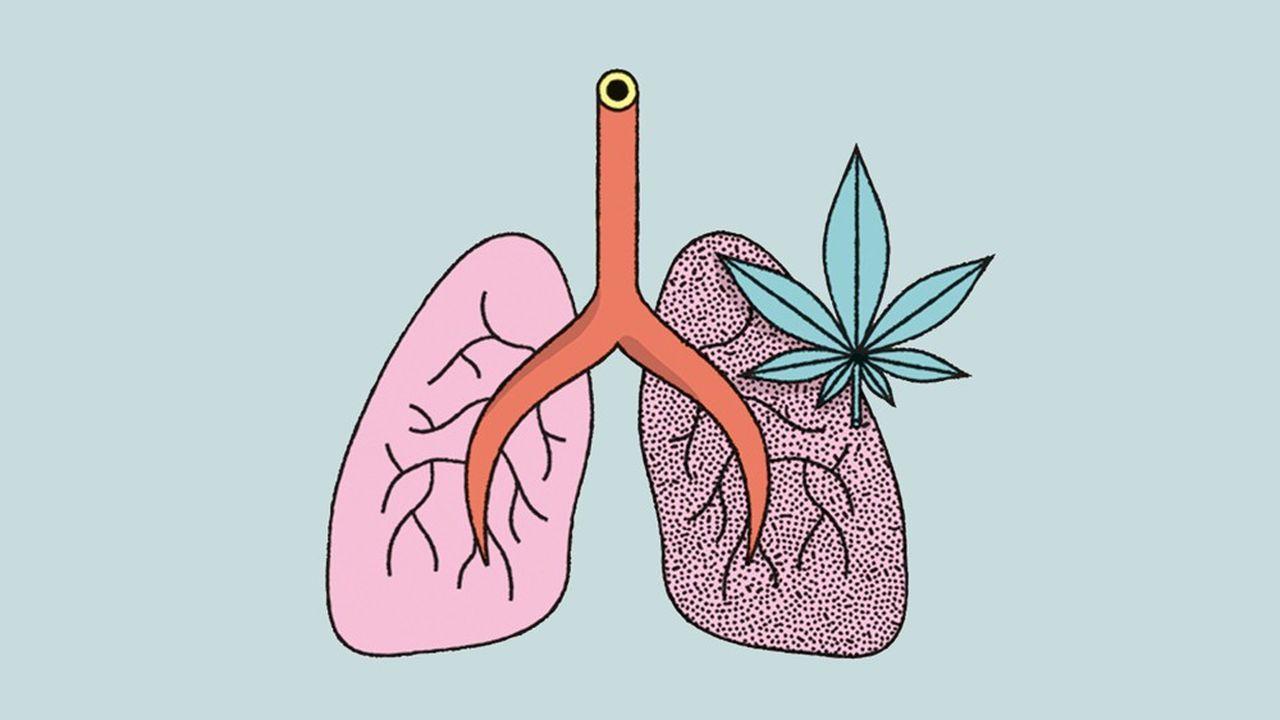 Cannabis : les poumons en danger