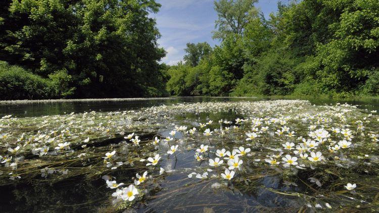 En 2014, un accord a été trouvé pour restaurer le débit réservé du Rhône, le minimum d'eau présent dans le lit du fleuve.