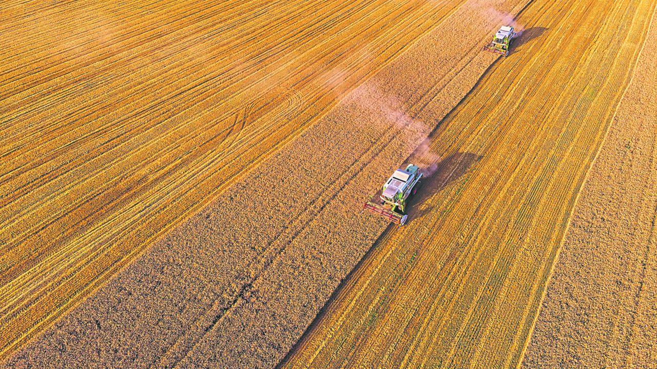 La production de blé tendre pourrait chuter de près de -21% en France ce qui ferait de la récolte 2020 la deuxième plus faible en quinze ans après 2016.