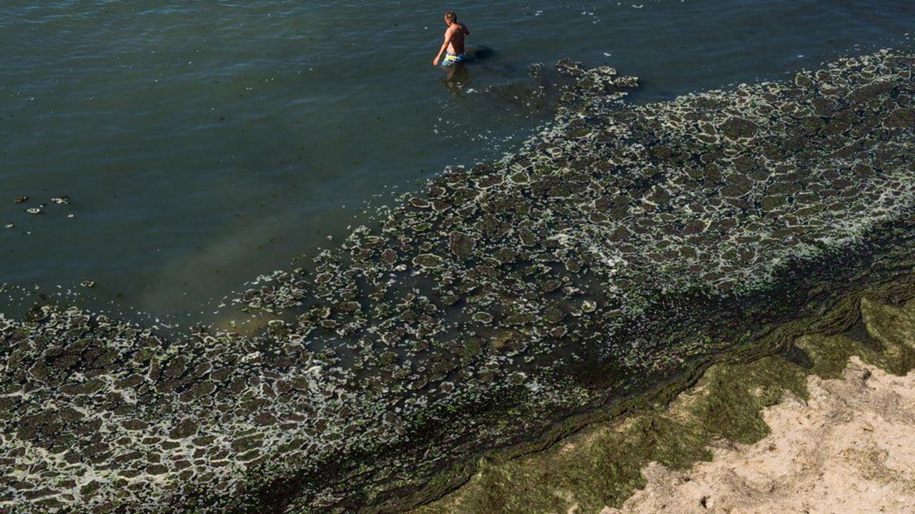 Pollution aux algues vertes