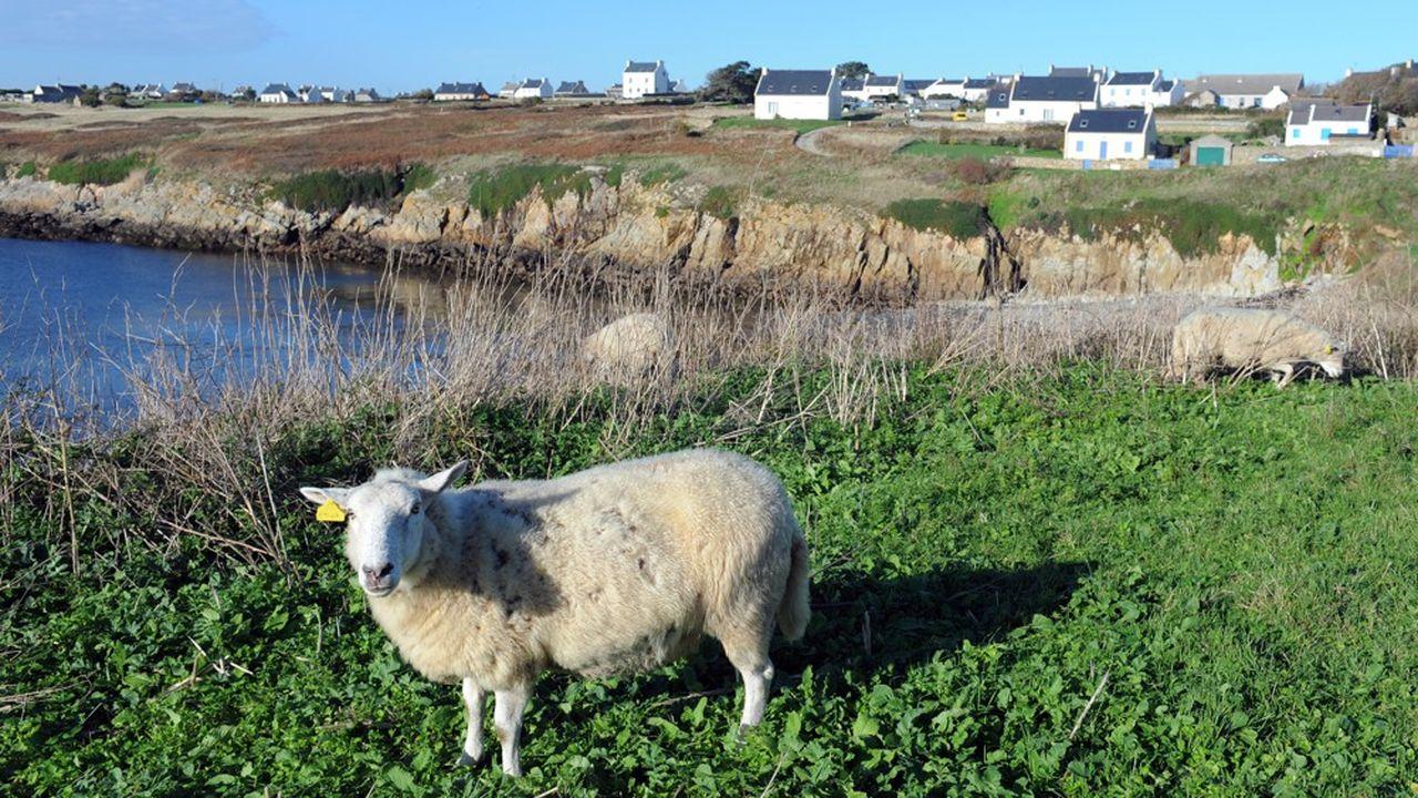 Contrairement aux apparences, il n'existe plus aucun exploitant agricole sur l'île d'Ouessant.