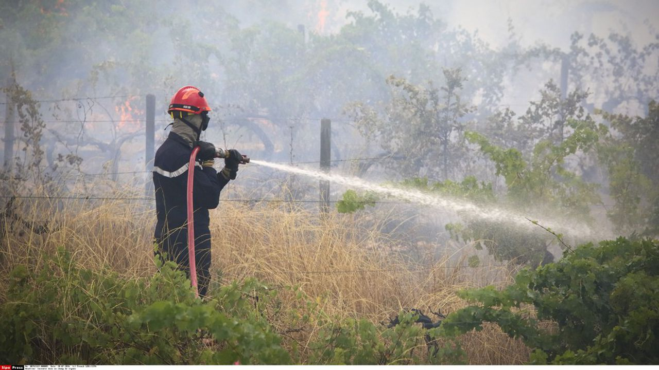 En 2019, 1.100 hectares ont brûlé.