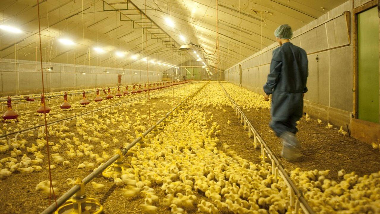 En 2010, Doux touchait 400euros par tonne de poulets congelés exportés.