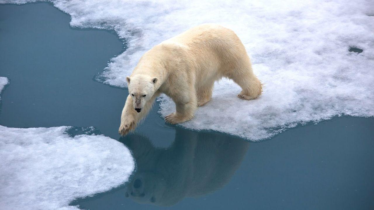 La fonte des glaces entraîne des difficultés pour les ours polaires à s'alimenter.