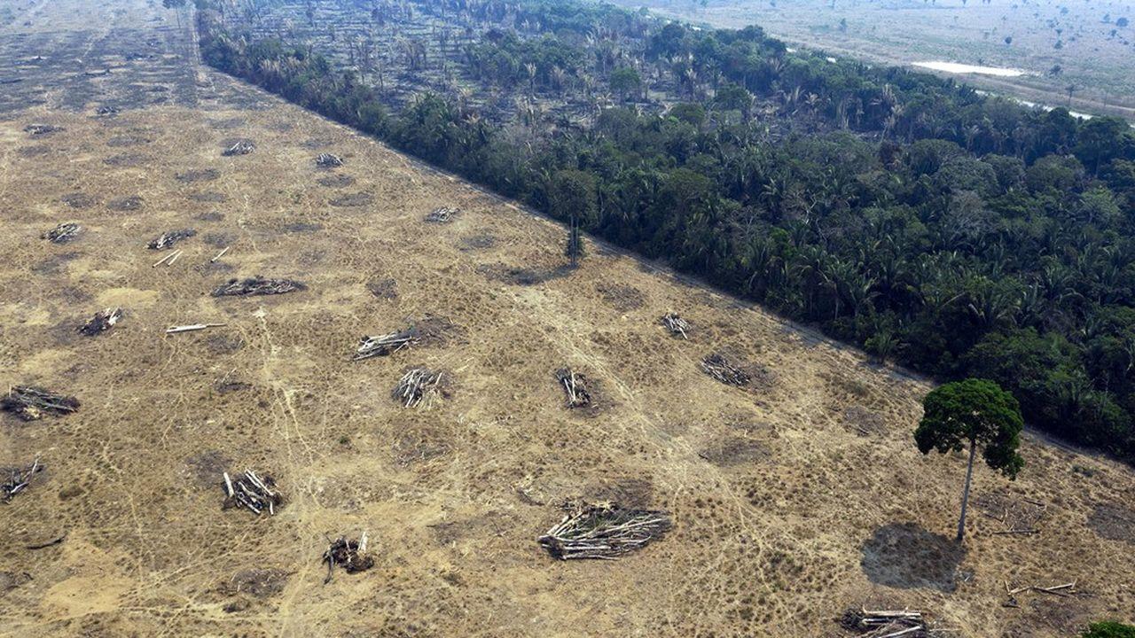 Déforestation à grande échelle dans l'Etat de Rondônia, au nord-ouest du Brésil.