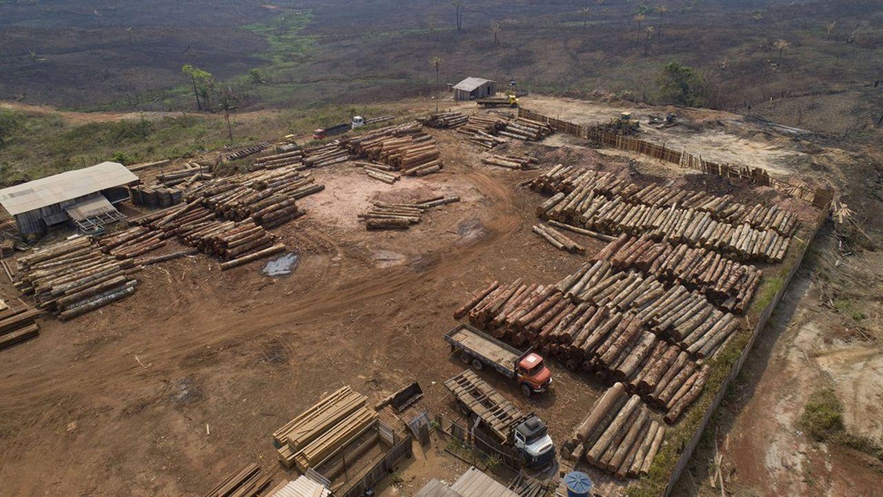 Les dégâts causés à la forêt amazonienne peuvent être irréversibles. Sa destruction peut libérer des virus potentiellement nuisibles pour l'homme.
