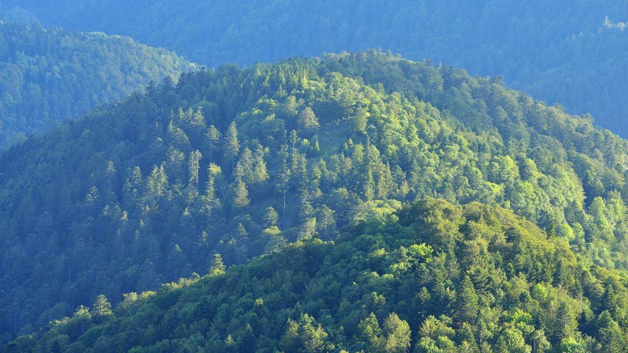 Le massif des Vosges.