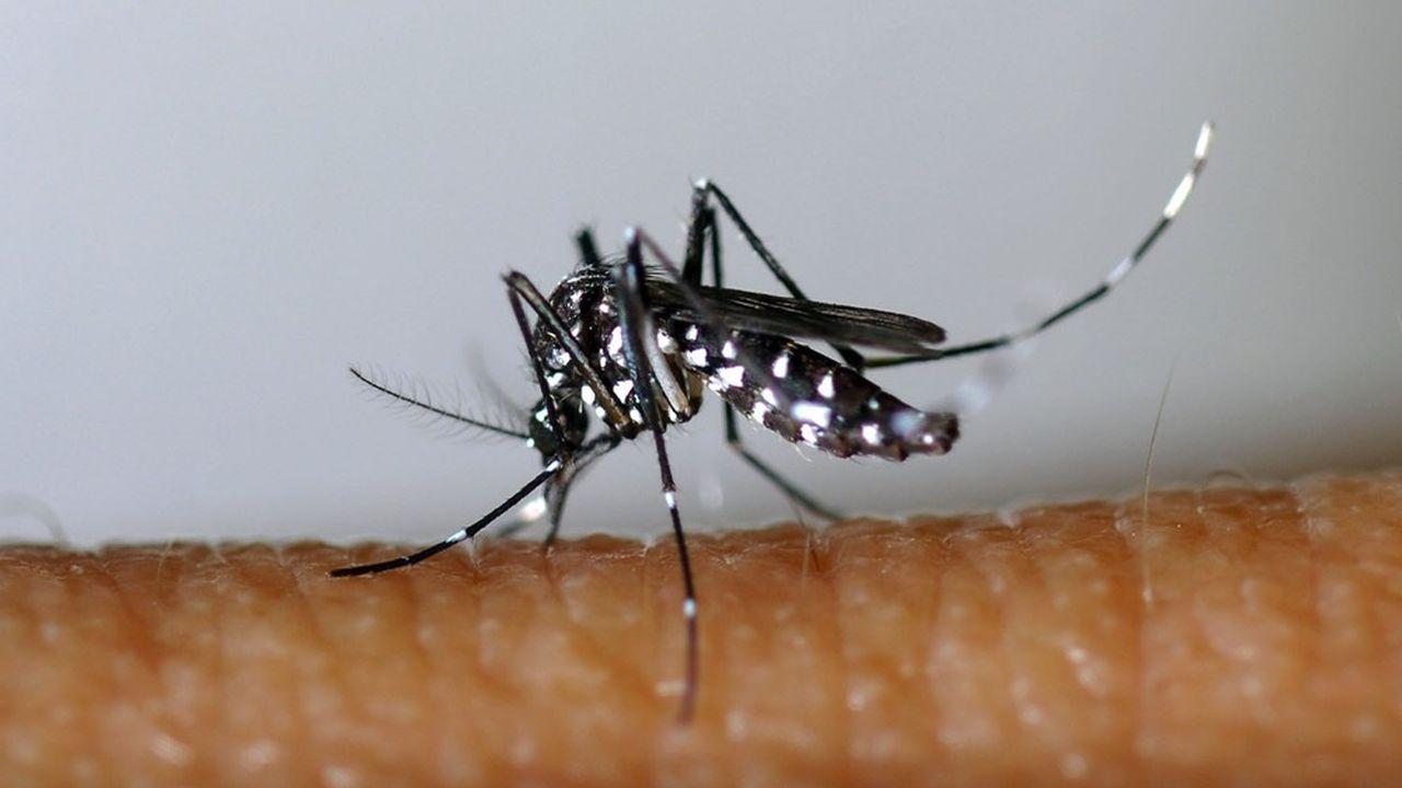 Le moustique tigre n'était pas présent en France métropolitaine jusqu'en 2004. Il est aujourd'hui actif dans la moitié des départements de l'hexagone.