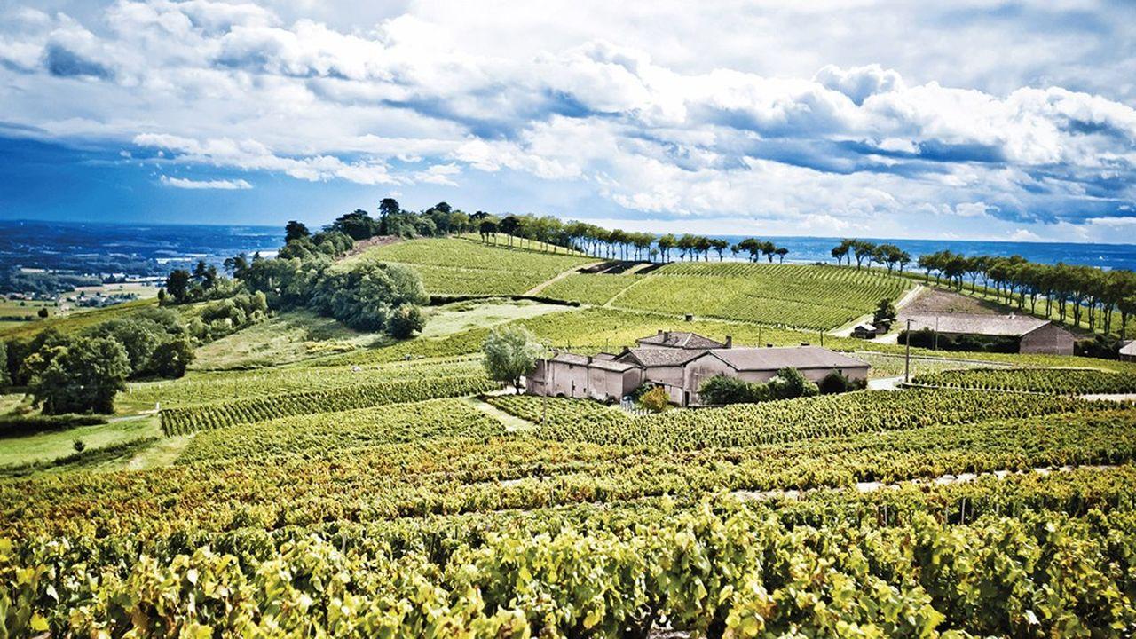 Le Château de Poncié comprend 40 hectares de vigne en fleurie.