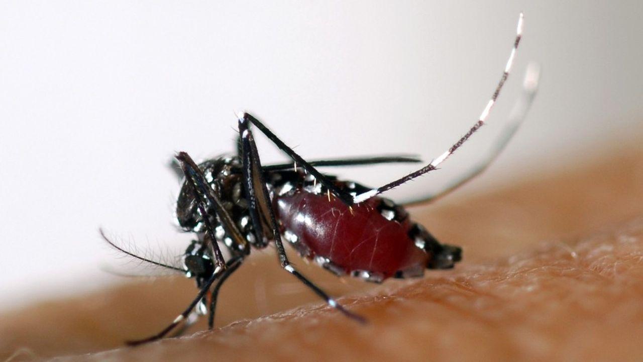 Les moustiques Aedes, de la famille des moustiques-tigres, sont en voie de coloniser une part croissante de la planète et l'ensemble des territoires français, alerte un rapport de l'Assemblée nationale mis en ligne sur son site Internet au début de cette semaine.