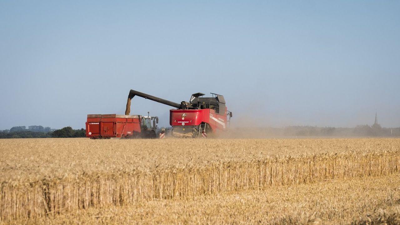 Les volumes de production de blé devraient reculer de 26% cette année.