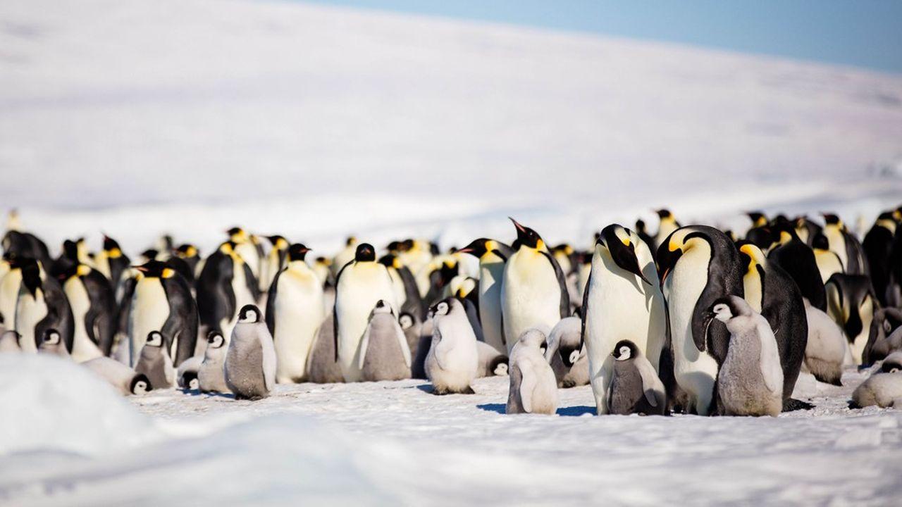 La plupart de ces colonies se trouvent toutefois dans des zones qui pourraient disparaître avec le réchauffement climatique.