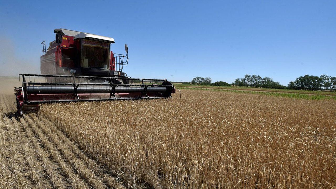 La Russie s'apprête à enregistrer l'une des meilleures récoltes de son histoire.