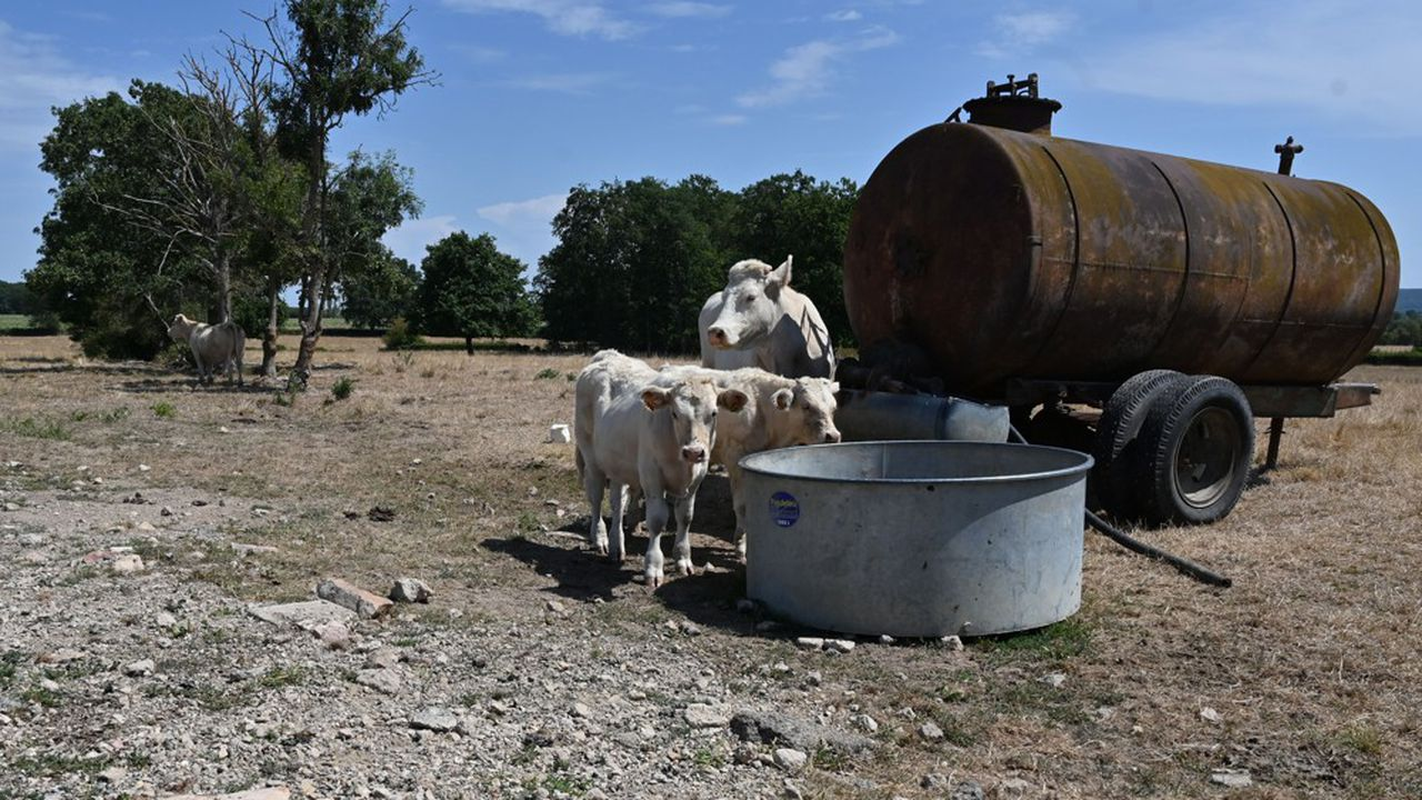 Les éleveurs pourront utiliser des jachères pour nourrir le bétail et les dates de semis imposées par la PAC seront décalées