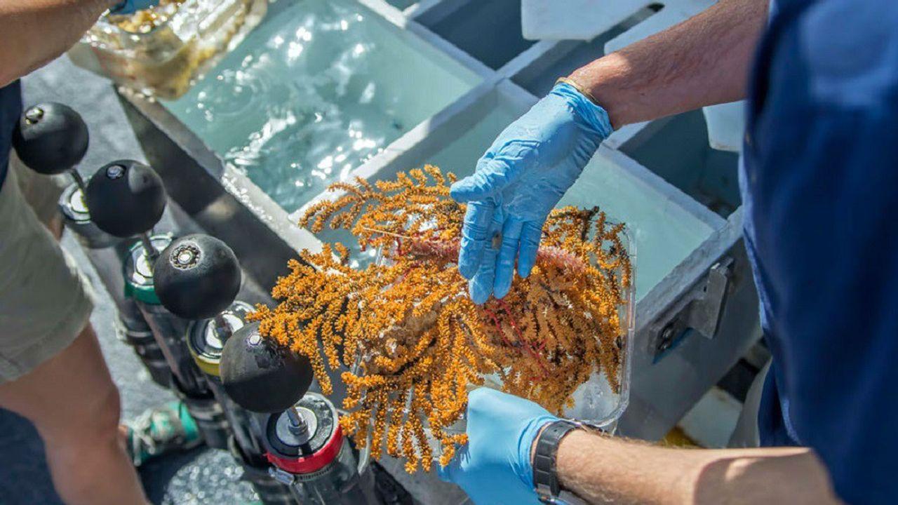 Les chercheurs manipulent avec soin les spécimens collectés lors de l'une des plongées.