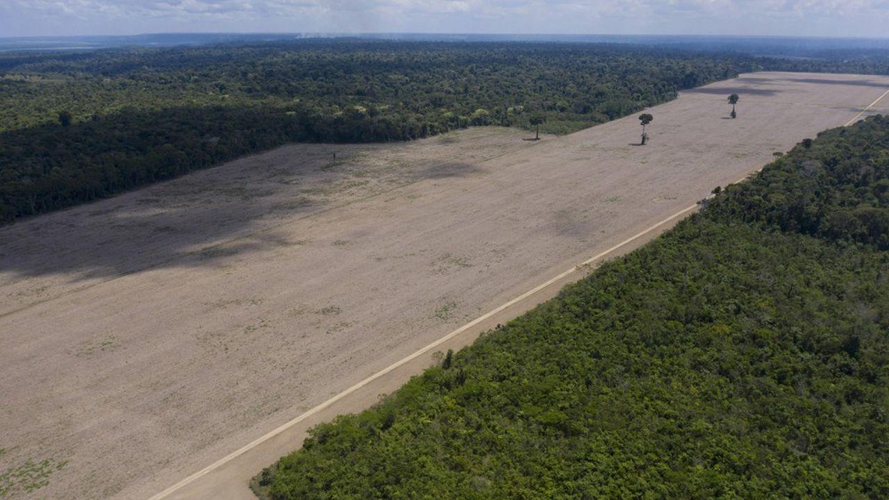 Une plantation de soja en Amazonie près de Santarém, dans le nord du Brésil