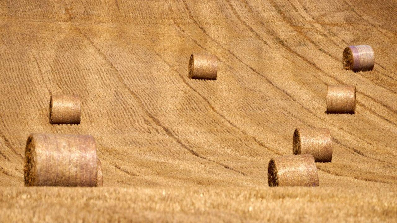 La récolte française de blé tendre pour 2020 va plonger de -26% à 29,2millions de tonnes. C'est la troisième plus petite de ces vingt-cinq dernières années.