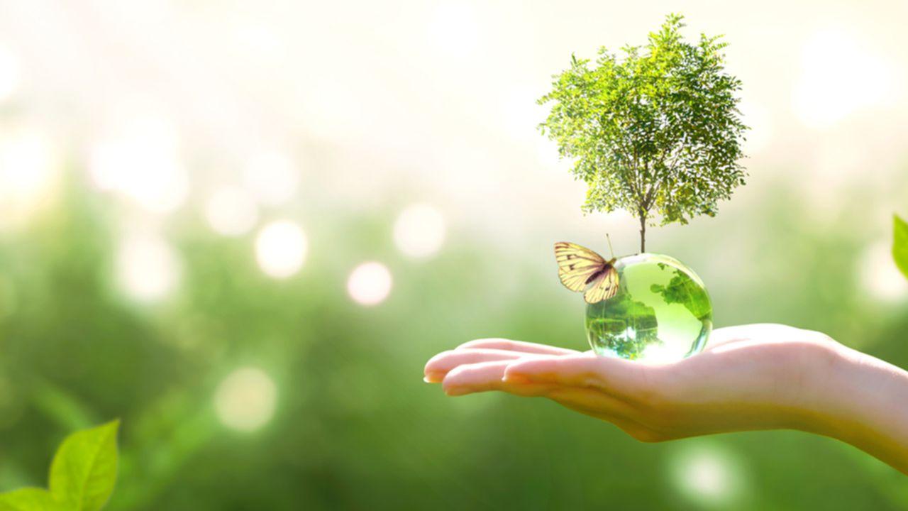 ENEDIS_TE_LESECHOS_Cinq start-up qui allient écologie et technologie_CREDIT SHUTTERSTOCK.jpg