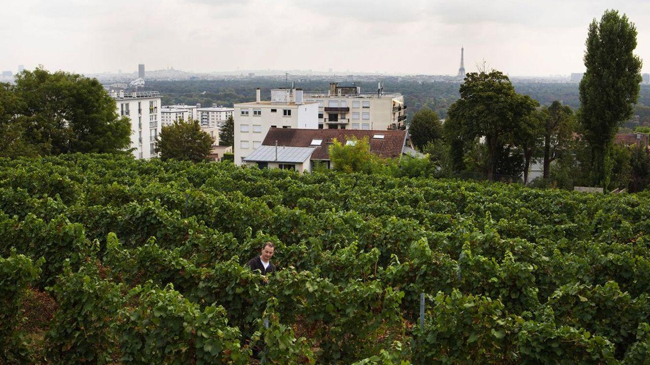 Les vignes de Suresnes, près de Paris, produisent 4.000 bouteilles par an.