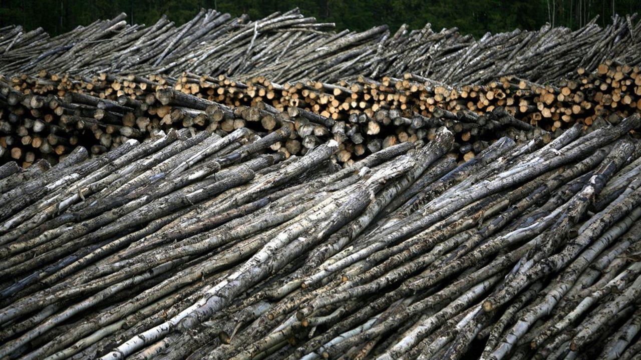 Un site de production de bois au Canada.