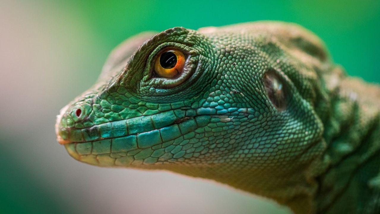 Reptiles, camélidés, poissons… Les innovations biomimétiques puisent leur inspiration dans le vivant, alliant efficacité et soutenabilité.