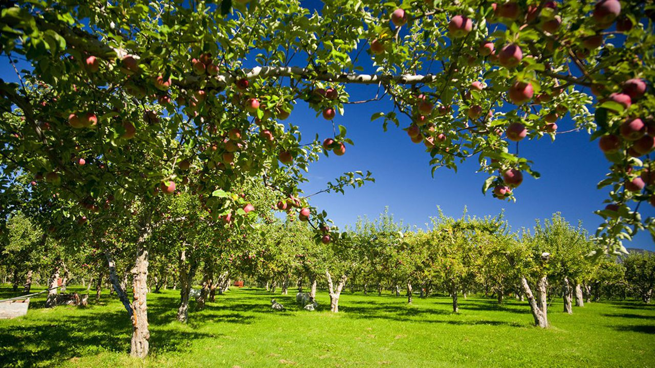 Le territoire veut réimplanter, sur une friche de 35 hectares (132 parcelles), des productions maraîchères, horticoles et arboricoles.