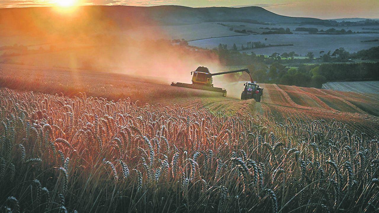 Plus de la moitié des producteurs de céréales français auront un résultat courant avant impôts négatif en 2020.