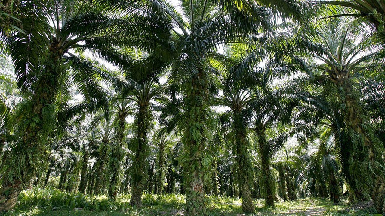 80% de la main-d'oeuvre dans les plantations malaisiennes de palme est étrangère.