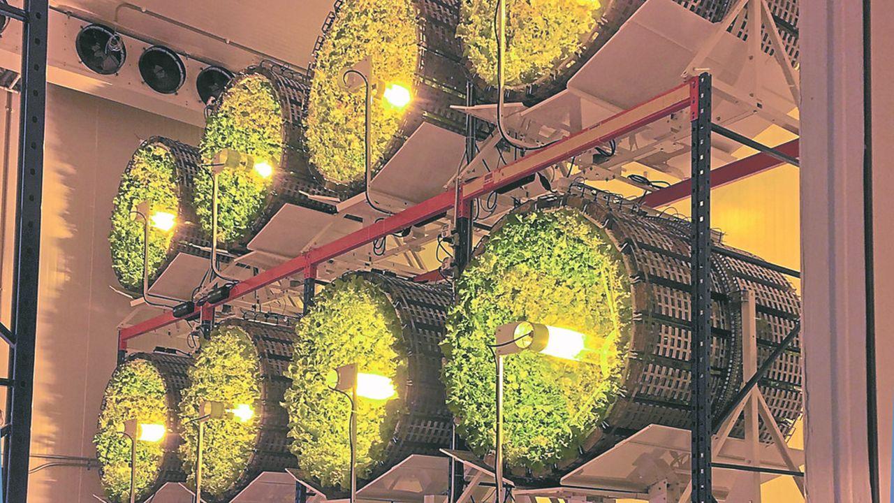 La start-up Futura Gaïa lance un nouveau mode de production vertical indoor.