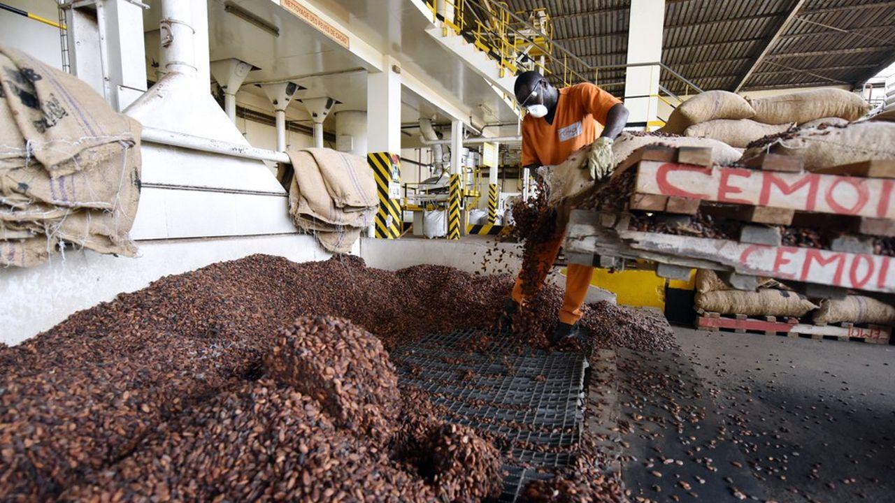 Un employé de Cémoi manipule des fèves de cacao.