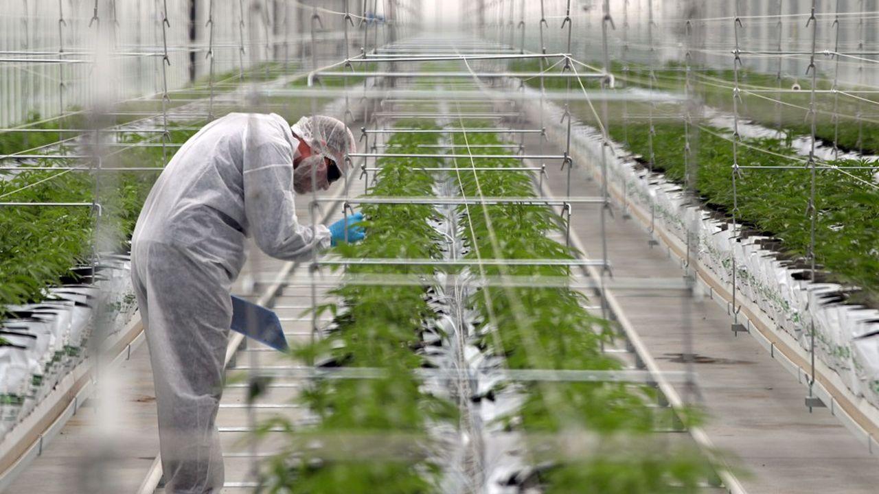 L'Assemblée nationale a autorisé en 2019 l'expérimentation du cannabis thérapeutique pour au moins 3.000 patients souffrant de maladies graves.